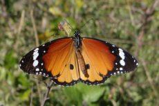 promatranje-leptira-231017-(3)